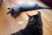 Почему коты так любят валериану?